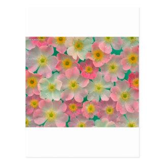 Flores del color en colores pastel postal