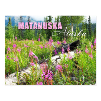 Flores del Fireweed en el valle de Matanuska, Postal