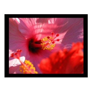 Flores del hibisco postal