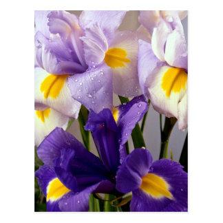 Flores del iris postales