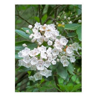 Flores del laurel de montaña postal