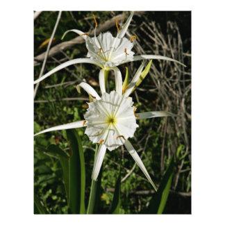 Flores del lirio de la araña folleto 21,6 x 28 cm