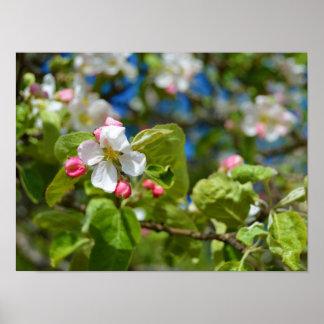 Flores del manzano póster