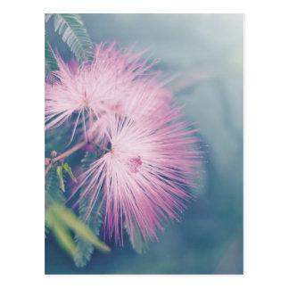 Flores en colores pastel suaves tarjetas postales