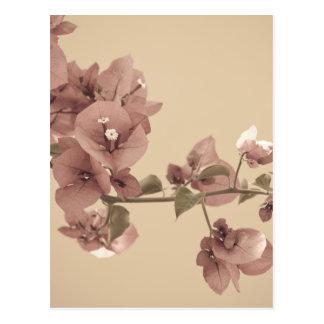 Flores en colores pastel tarjetas postales