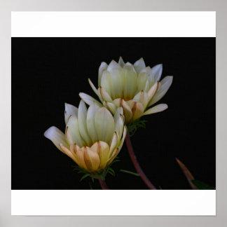 Flores en fondo negro impresiones