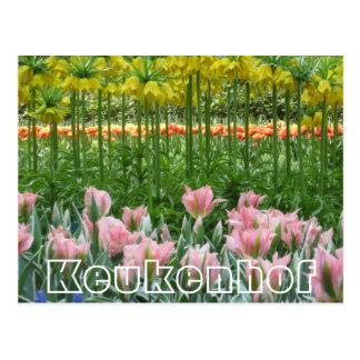 Flores en Keukenhof, alto y corto Tarjeta Postal