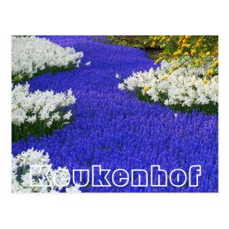 Flores en Keukenhof, el blanco y la púrpura Postal