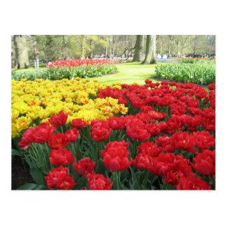 Flores en los jardines de la demostración del hola postales