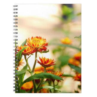 Flores eternas libretas espirales