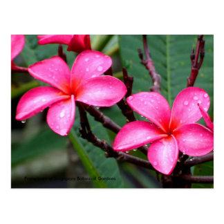 Flores exóticas, Frangipani en Singapur botánico… Postal