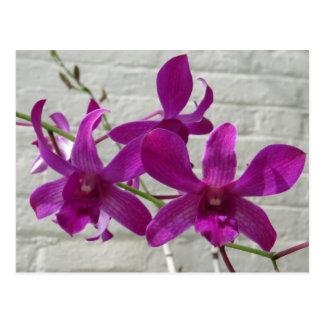 Flores exóticas violetas de la orquídea postal