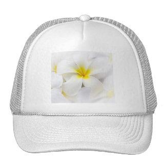 Flores florales del Plumeria del Frangipani blanco Gorro