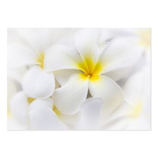 Flores florales del Plumeria del Frangipani blanco Tarjetas De Visita Grandes