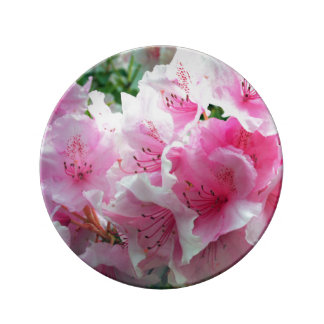 Flores florales rosados de Falln Plato De Porcelana