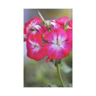 Flores - Flores Impresión En Lienzo Estirada