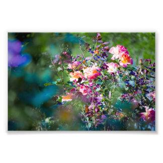 Flores frías impresion fotografica
