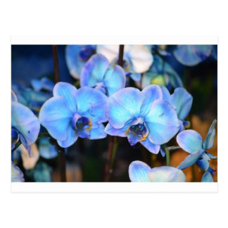 flores gemelas postal