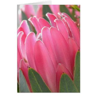 Flores hawaianas del Protea Tarjeta