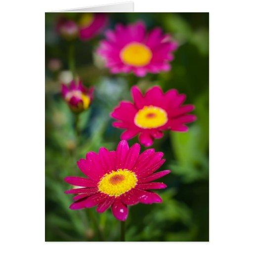 Flores magentas felicitaciones