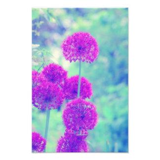 Flores mundo fotografias