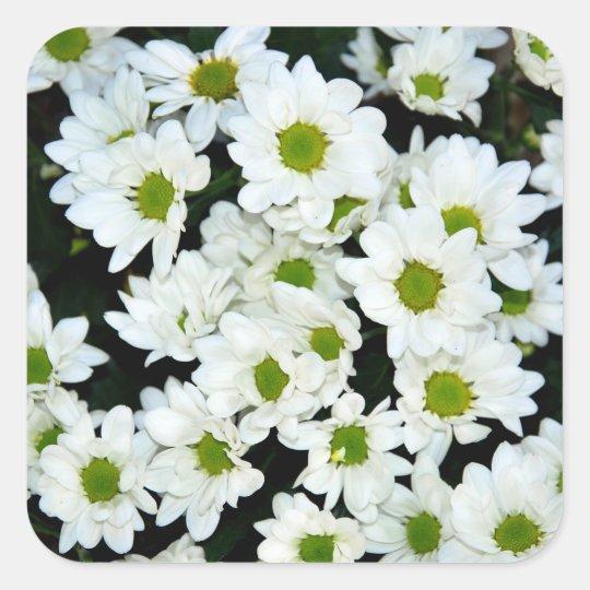 Flores Pegatina Cuadrada