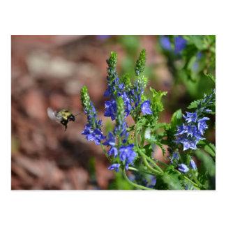 flores Púrpura-azules con la abeja Postal