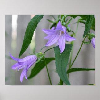 Flores púrpuras delicadas posters