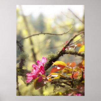 """flores """"radiantees"""" rojos #10 de la manzana de can posters"""