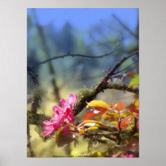 flores radiantees rojos 10 de la manzana de can impresiones