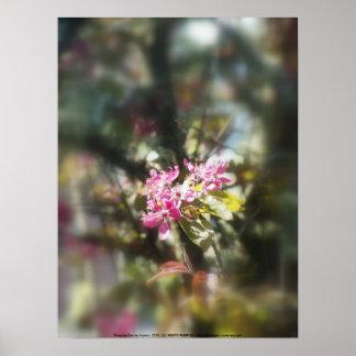 """flores """"radiantees"""" rojos #11 de la manzana de can póster"""