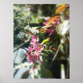 """flores """"radiantees"""" rojos #12 de la manzana de can poster"""