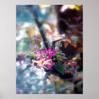 """flores """"radiantees"""" rojos #13 de la manzana de can póster"""