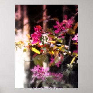 """flores """"radiantees"""" rojos #3 de la manzana de cang poster"""
