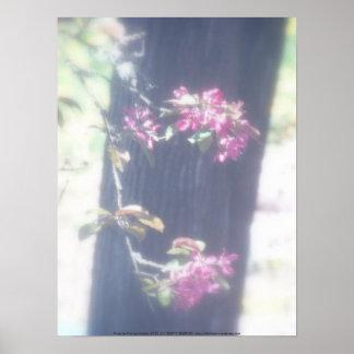 """flores """"radiantees"""" rojos #6 de la manzana de cang poster"""
