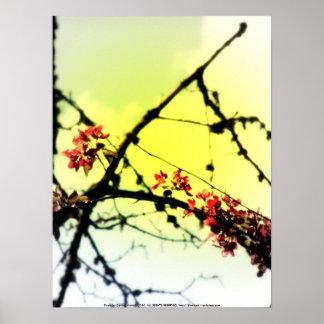 flores radiantees rojos 7 de la manzana de cang posters