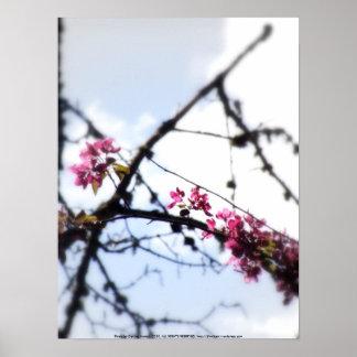 """flores """"radiantees"""" rojos #7 de la manzana de cang poster"""