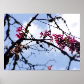 """flores """"radiantees"""" rojos #8 de la manzana de cang poster"""