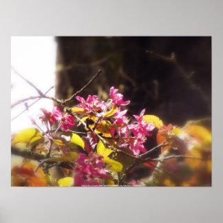 """flores """"radiantees"""" rojos #9 de la manzana de cang póster"""