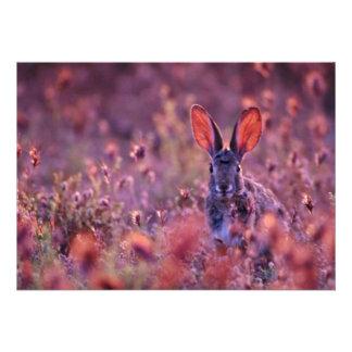 Flores retroiluminadas del rosa del conejo de rabo comunicado