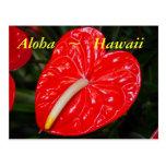 Flores rojas hawaianas del Anthurium Postal