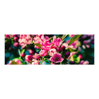 Flores rosadas de Apple de cangrejo Foto