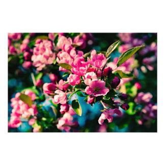 Flores rosadas de Apple de cangrejo Fotografias