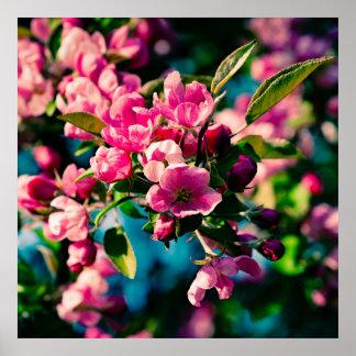 Flores rosadas de Apple de cangrejo Póster