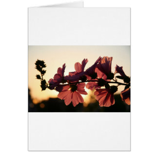 Flores rosadas en la puesta del sol tarjeta de felicitación