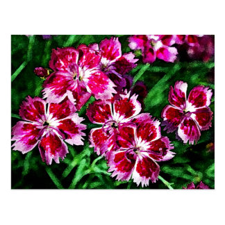 Flores rosadas y blancas poco rojas postales