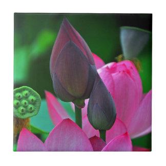 Flores rosados de Lotus Azulejo Cuadrado Pequeño