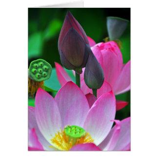 Flores rosados de Lotus Tarjeta De Felicitación