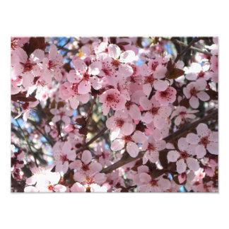 Flores rosados en árbol floreciente de la foto