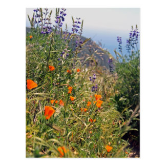 Flores salvajes en el sol postal